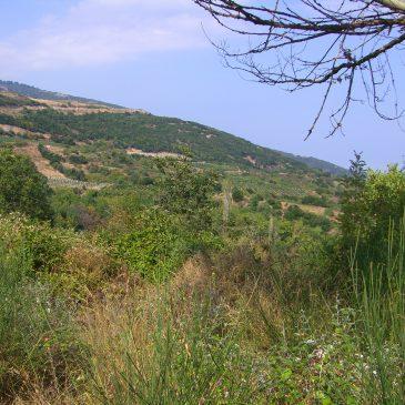 Wijnwandelen in de achtertuin van Zeus