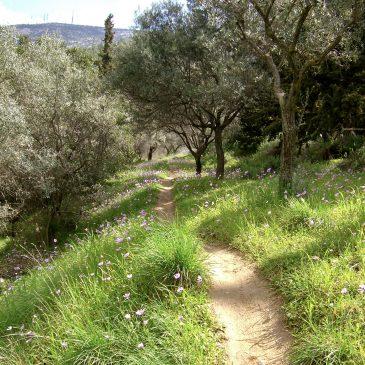 Ymittos, de groene long van Athene.
